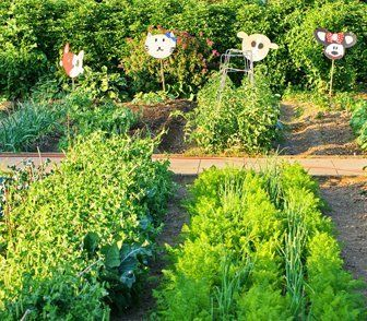Topsoil on rows of vegetables