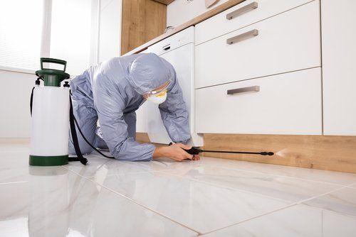 uomo che spruzza un insetticida nello zoccolo di una cucina