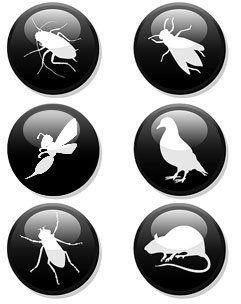 allontanamento insetti e volatili Cuneo