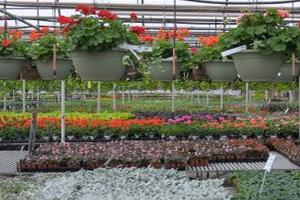 Sharum's Garden Center - Garden Center