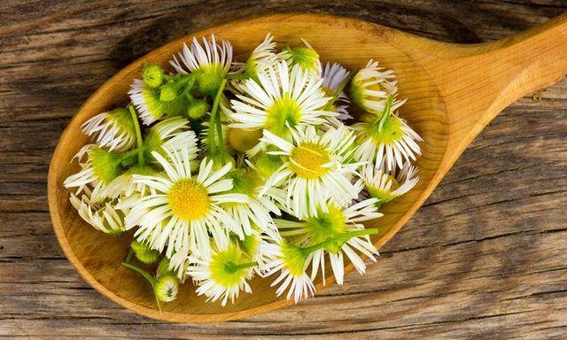 cucchiaio di legno con fiori per infuso
