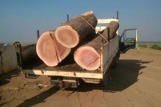 logs in back of truck