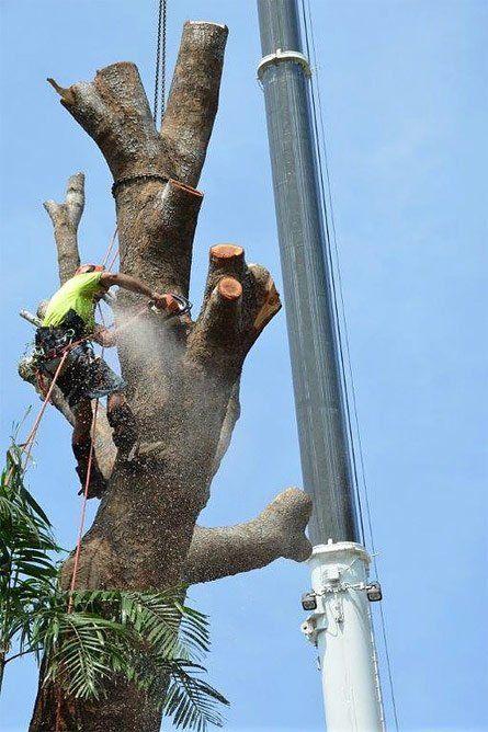man cutting off limb of tree
