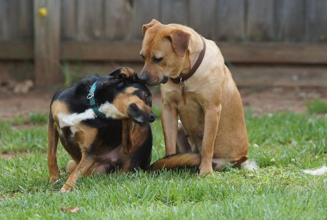 Caring For Your Rescued Dog