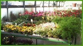 fiori e piante su un tavolo espositivo di un vivaio
