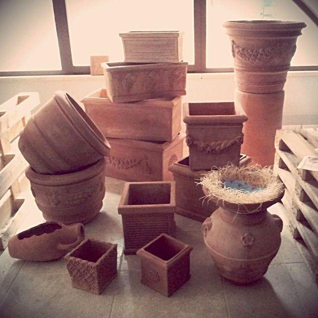 dei vasi in terracotta con dentro della piante appena germogliate
