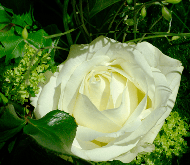 ONORANZE FUNEBRI RAZZA & CARINI, Rivergaro (PC), onoranze funebri