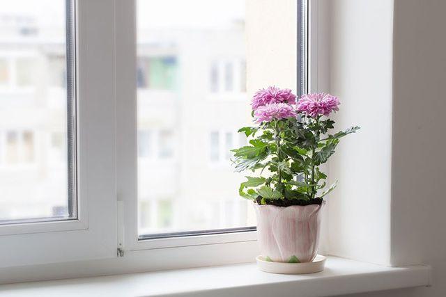 Finestra scorrevole di PVC bianca e un fiore rosa in un vaso