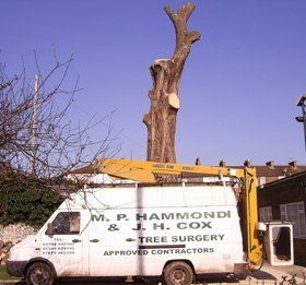Site clearance - Kent - J.H Cox & M.P Hammond - Tree work
