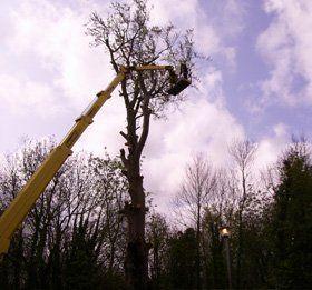 Tree surgery - Dover - J.H Cox & M.P Hammond - Tree work