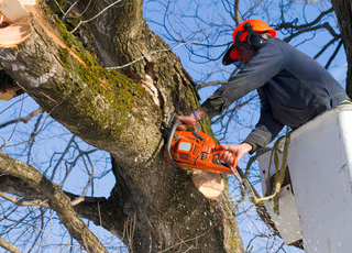 A tree surgeon in protective clothing sawing a branch