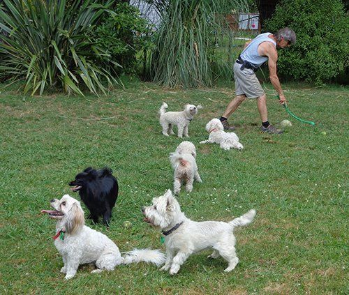 View of cute dogs with trainer playing