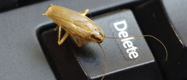 A bug needing pest removal in Hastings