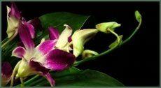 fiore con petali viola