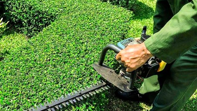 Lawn Mowing Service Auckland AA Cleaning Ltd