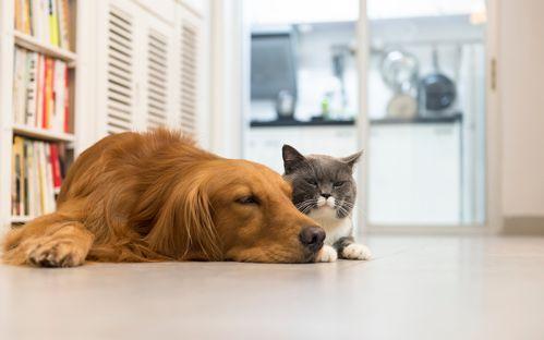 Pet Care - Bronx, NY - Armory Dog & Cat Hospital