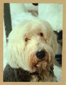Dog Memorials | Ferndale, WA | Bowzer's B and B Kennels