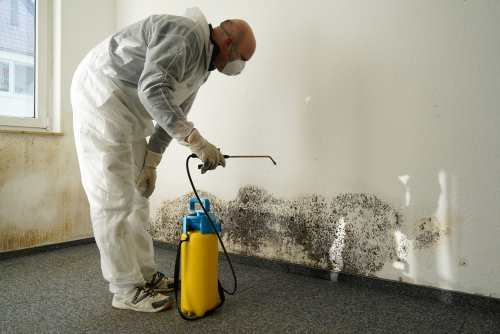 Specialist working on mold remediation in Kalispell, MT