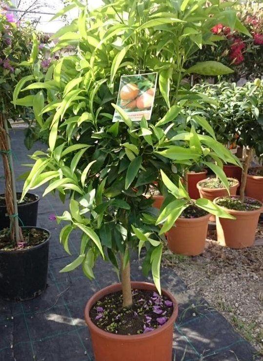 Una pianta in un vaso