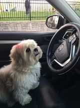 pet friendly car service hoboken