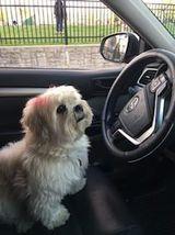 pet friendly car service hoboken
