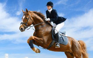 horse jumping in the air