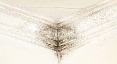 penetrating damp wall