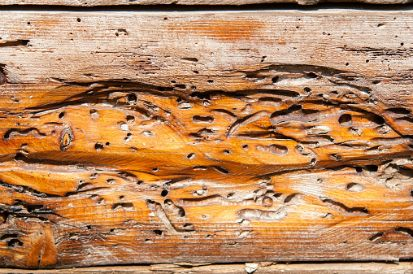 termite exterminator Midland, TX