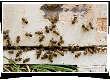 pest control companies Odessa, TX
