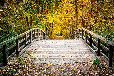 un ponte di legno e degli alberi in una giornata di autunno
