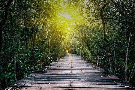 un ponte di legno in un bosco