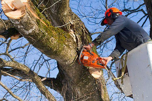Tree Service Fairfield, CT