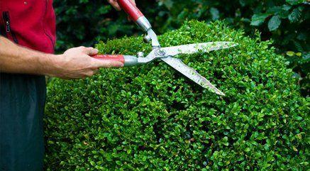 hedging