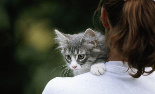 Kitten on woman's shoulder