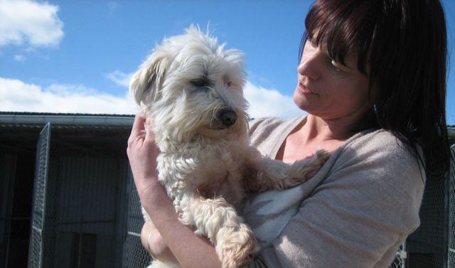 Pet care service in Stratford