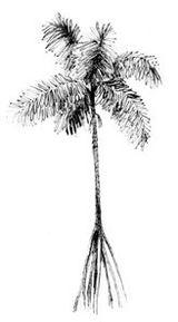 La falegnameria propone arredi di palma.