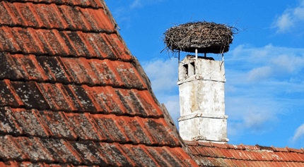 bird nesting in chimney