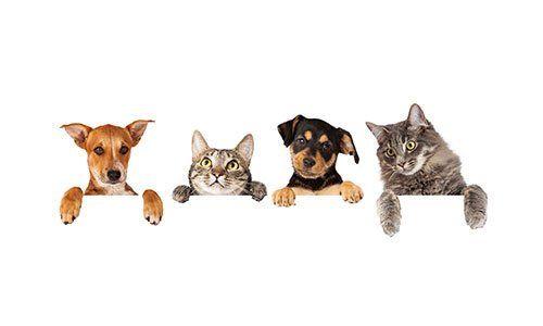 dei cani e dei gatti