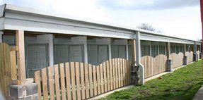 Pale timber fencing with curved tops, running alongside our spacious kennels