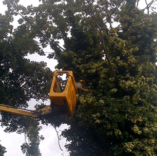 using a cherry picker for tree work