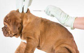 puppy health check