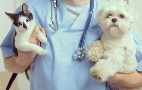 a vet holding a cat and a dog
