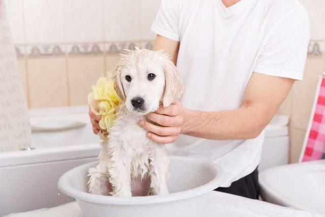 un ragazzo che lava un cane in un catino