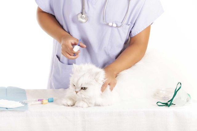 un gattino bianco e dietro una veterinaria