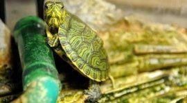 tartarughe, rieti