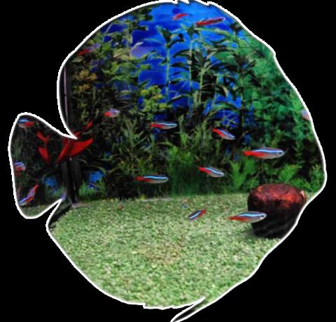 pesci tropicali, acquari tropicali, pesci tropicali rieti