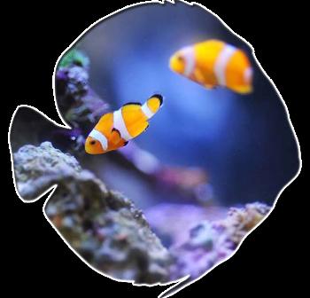acquari marini, acquari pesci marini, Rieti