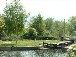 A grassy tree-lined bank alongside a river
