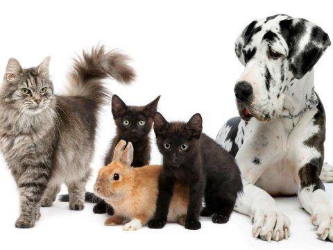 tre gatti un coniglio e un cane dalmata