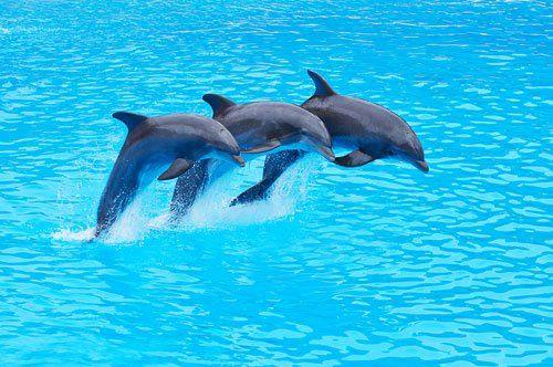 tre delfini che saltano